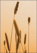 weeds_sin